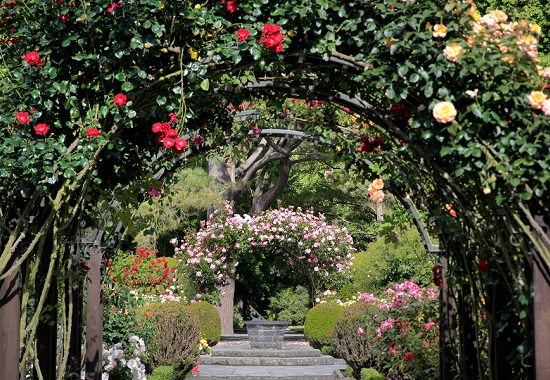 Rose Garden In The Botanic Gardens